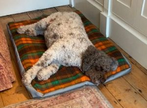 Lottie fast asleep on her MisSpelt luxury bed