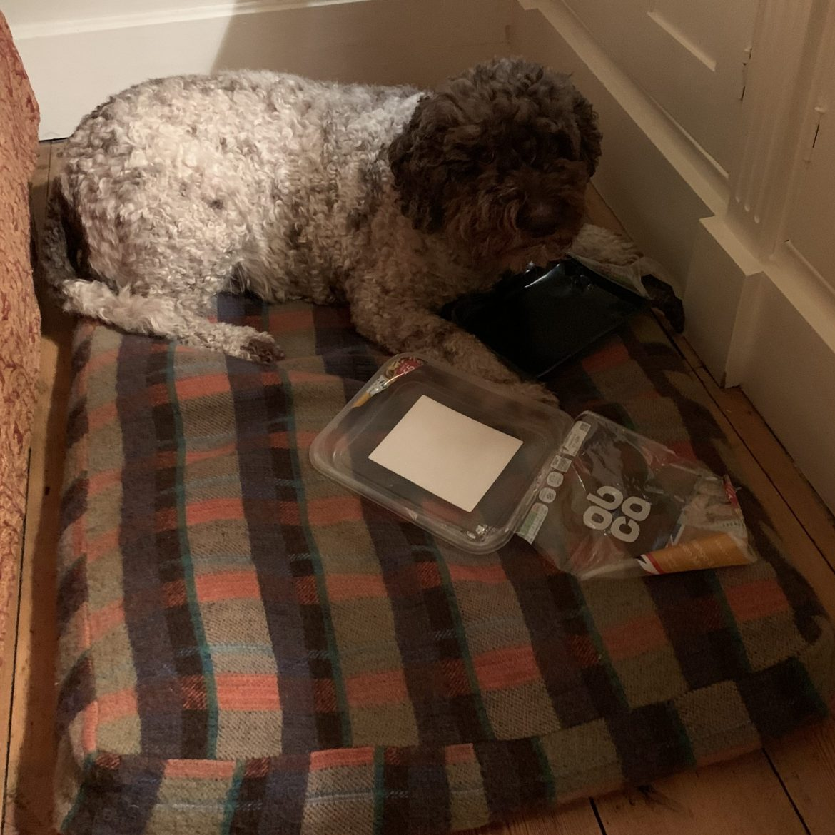 Lottie on her old bed with foraging trophy